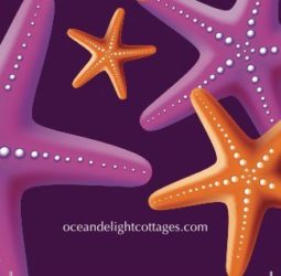 Ocean Delight Cottages